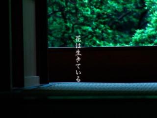2007年〜  ビデオ・ウェブサイト 制作