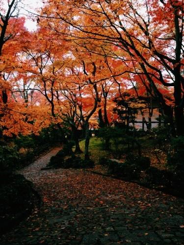 紅葉の常寂光寺